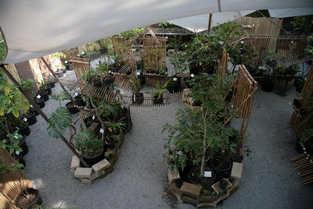 New_Nuovo allestimeno dedicato alle piante ropicali dell'Orto Botanico_Tropicarium_ a cura di Alejandor Guzzetti