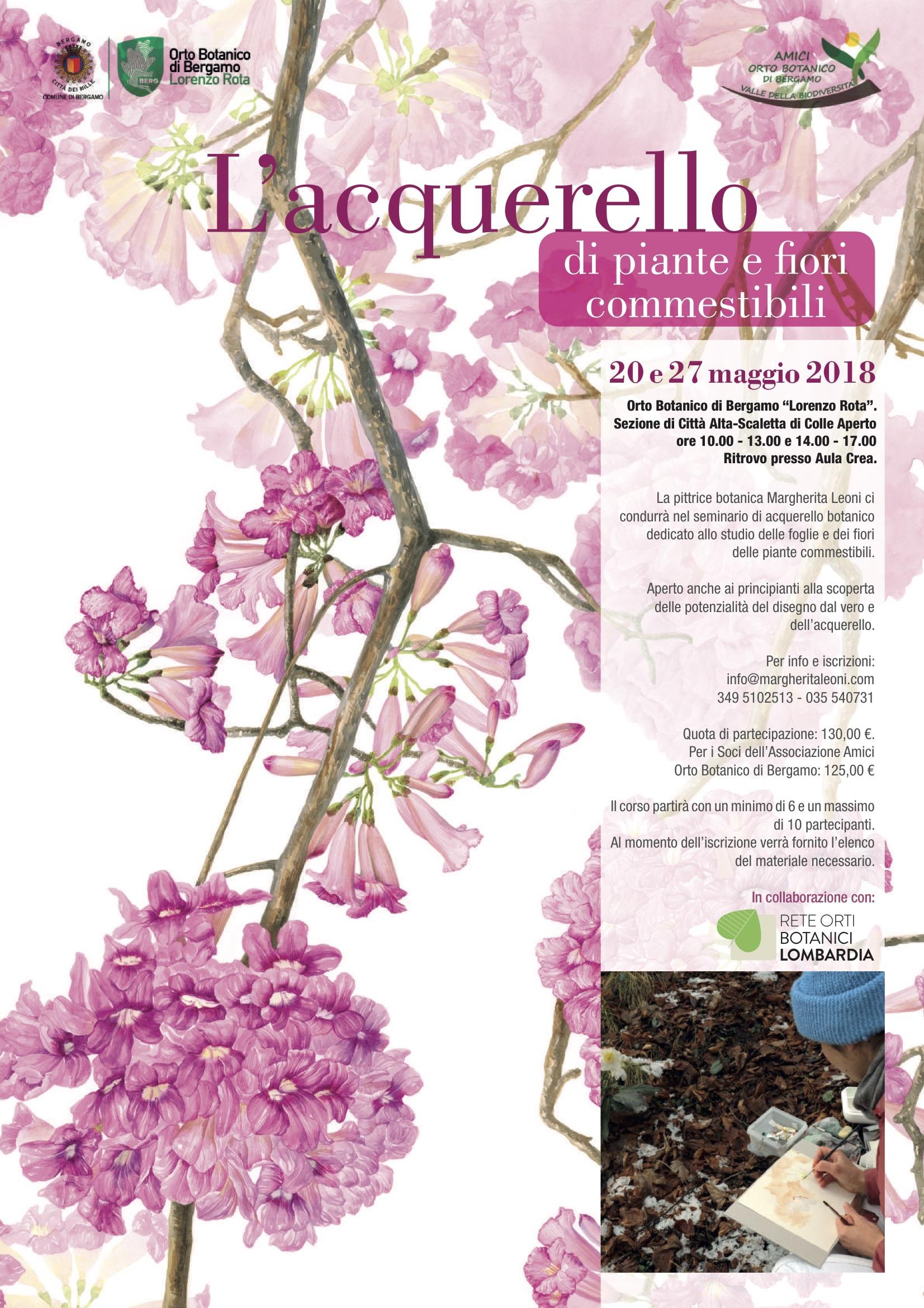 Fiori E Piante Commestibili l'acquerello di piante e fiori commestibili | orto botanico